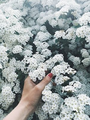 Sandra Linnell - Can you feel it? White flowers and red nails.