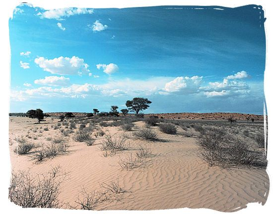 Kgalagadi Transfrontier National Park,...  The raw beauty of the semi-desert landscape in the Kgalagadi Transfrontier National Park
