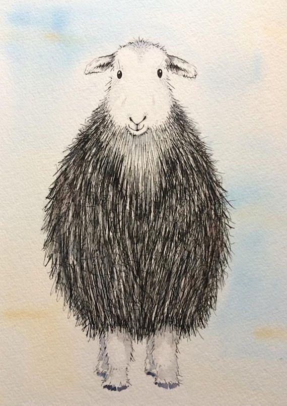 Herdwick sheep original watercolour painting