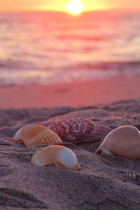 Ocean shells at sunset