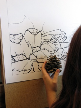 contour line with pinecone