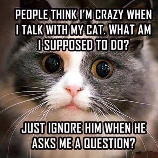 Cat People Will Definitely Relate To These Memes