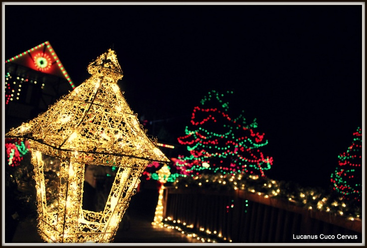 1000 images about holiday lights on pinterest lakes 12 for New hampshire motor speedway christmas lights