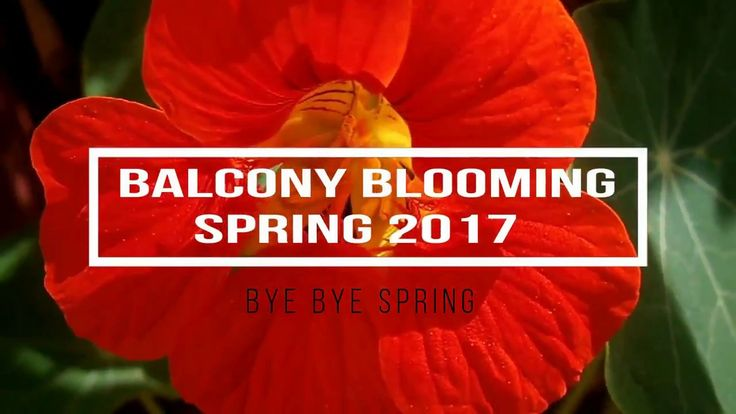 Balcony blooming Spring 2017 - Bye bye Spring #spring #blooms #cactus #flowers #balcony #patio