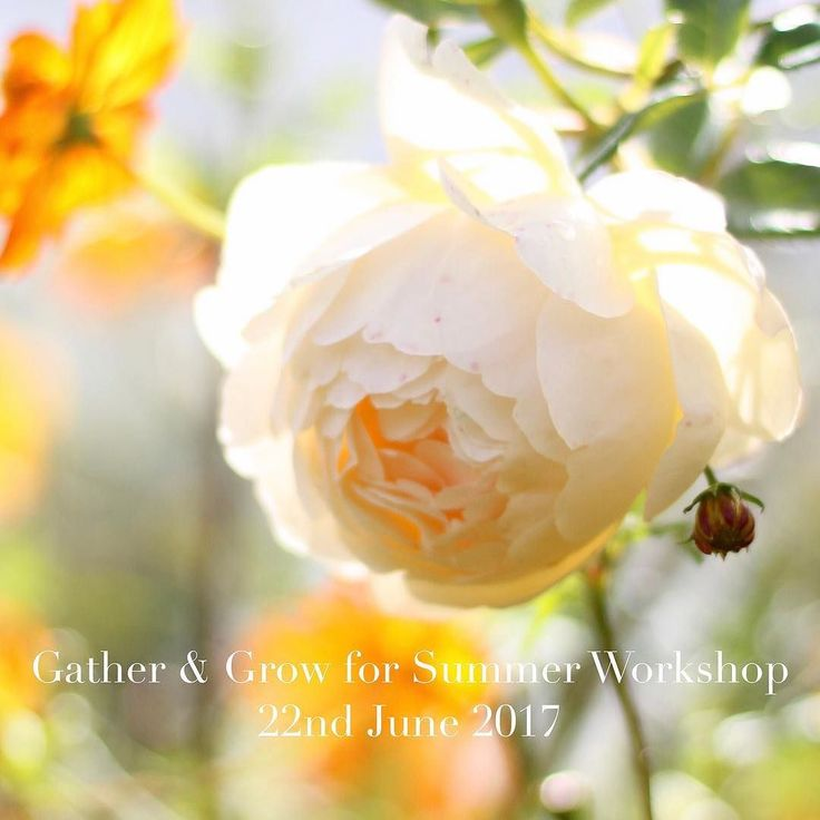 I am back from Dubai & rushing around getting everything ready to welcome the lovely ladies who are joining Brigitte @mossandstoneuk and I for our first collaborative workshop on Thursday. I can't believe it is already time to start planning our summer Gather & Grow workshop which is happening on 22nd June in my garden. I will be talking about all the lovely things you can grow for summer and concentrating particularly on growing roses. Brigitte will be showing you how to make something…