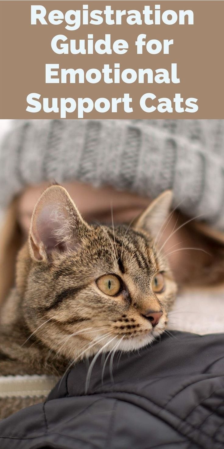 Registration Guide for Emotional Support Cats in 2020