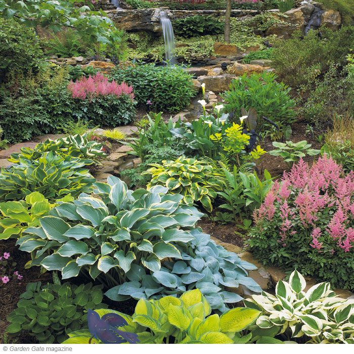 Beautiful Mix.: Gardening Landscaping, Shades, Shade Gardening, Hostas Garden, Outdoor, Hosta Gardens