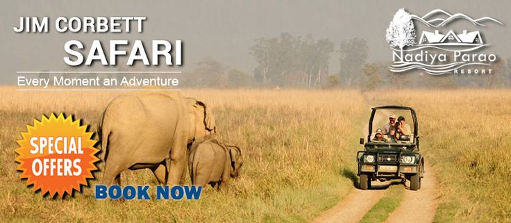 The main attraction of the Jim Corbett National Park is the safari ride. The Jim Corbett Safari Cost is highly reasonable. For arranging a safari online booking from the official site of the Uttarakhand tourism can be made. Each jeep is assisted with a driver and a forest guide. A jeep can accommodate up to six passengers at a time. http://bit.ly/2bXnzab #jimcorbettsafaricost #jimcorbettsafaribooking #jimcorbettbestresorts