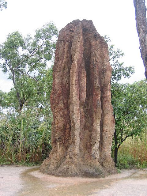 Termite Mound, Litchfield National Park, Australia.  Photo: locationindependent, via Flickr