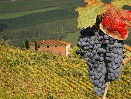 Tuscany Day Trips From Florence | Walks of Italy