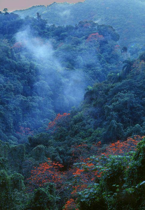 "El  Yunque jungle, Puerto Rico.  ""Rainforest View"" from Grand Rio Mar Resort...Beautiful!"