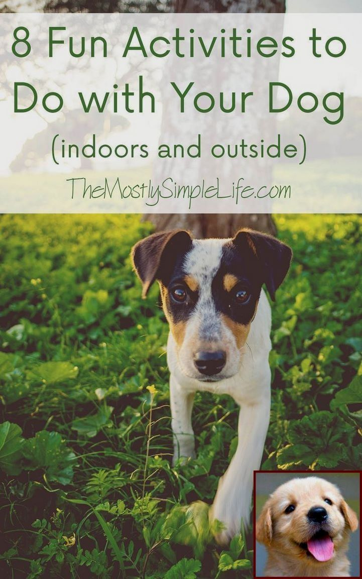 1 Have Dog Behavior Problems Learn About House Training A Puppy 8