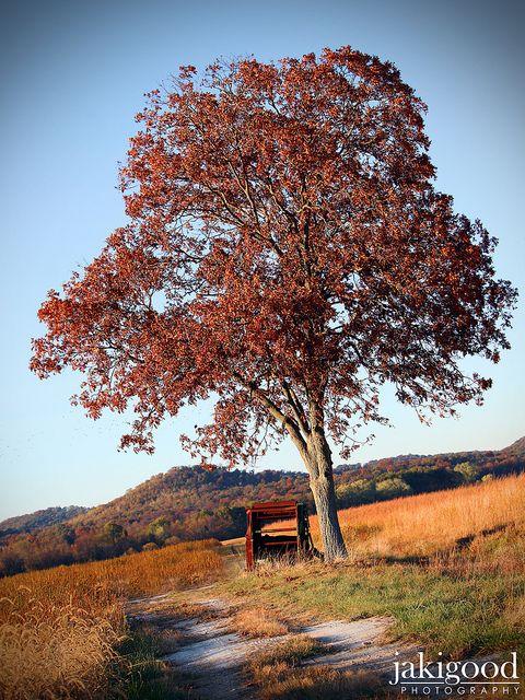 cinnamon tree - photo #31