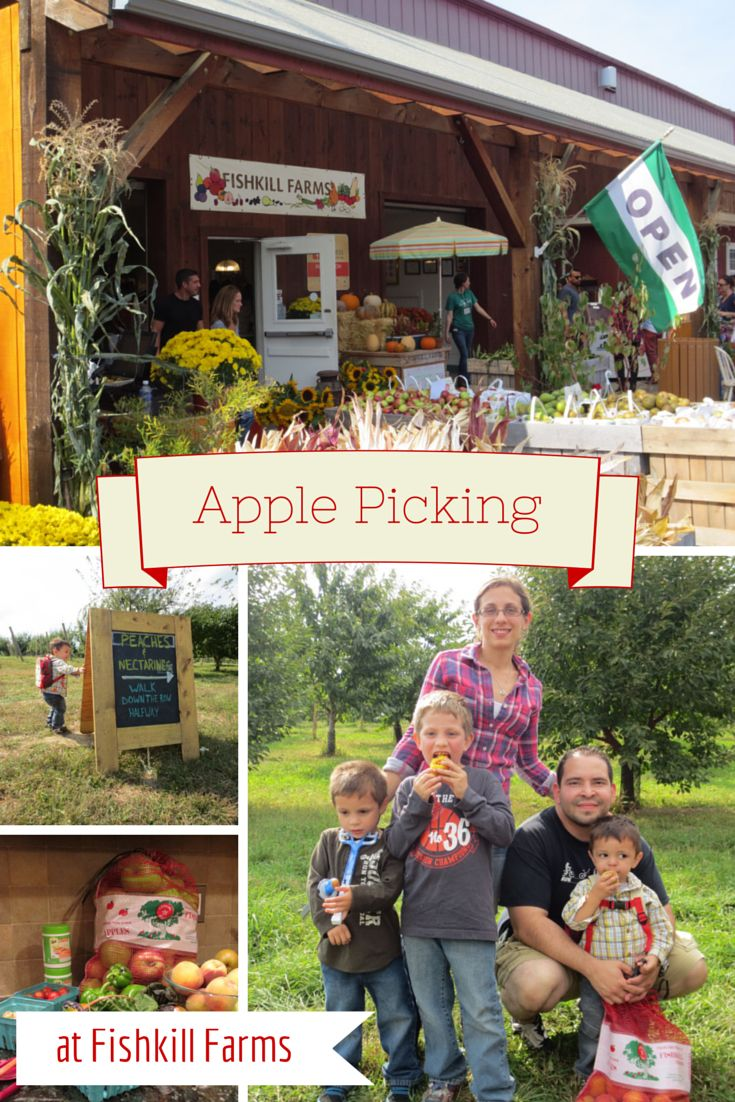Apple Picking at the gorgeous Fishkill Farms - a day full of family fun!