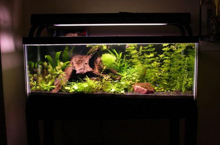 20 gallon long aquarium image