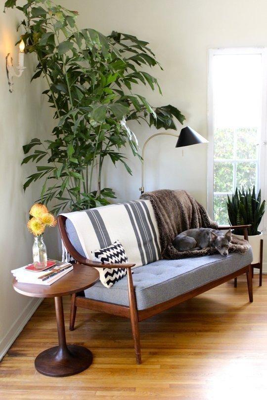 Colocar una gran planta detrás de un sofá, es una excelente idea para dar color natural a ése espacio.