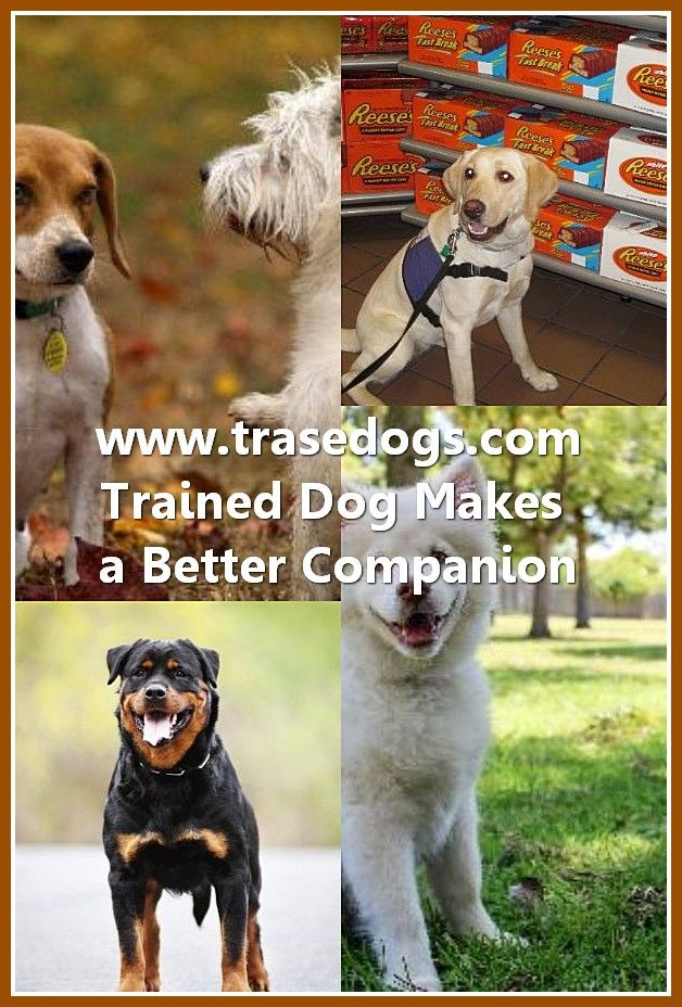 Talking About Dog Dogs Pet Safe Best Dog Shampoo