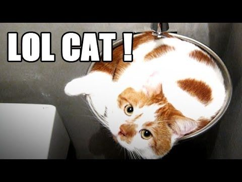 Very funny cat videos. Most see on planet! Please watch it..