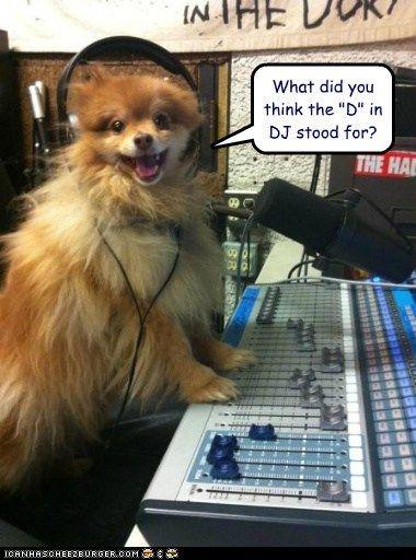 dog meme with headsets   ... headphones - Loldogs n Cute ...