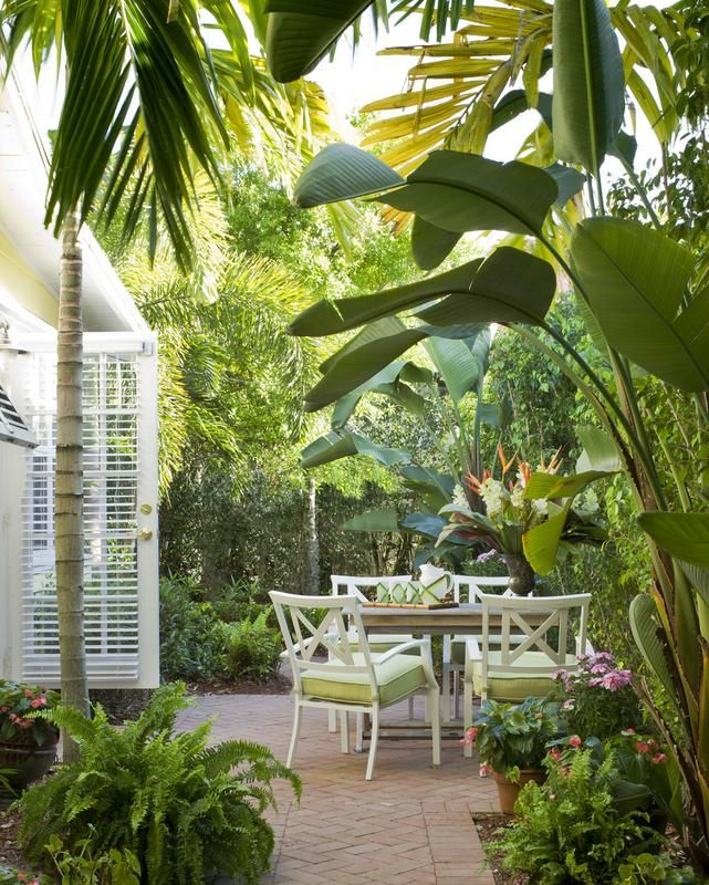 25 best ideas about tropical patio on pinterest outdoor for Terrace plants