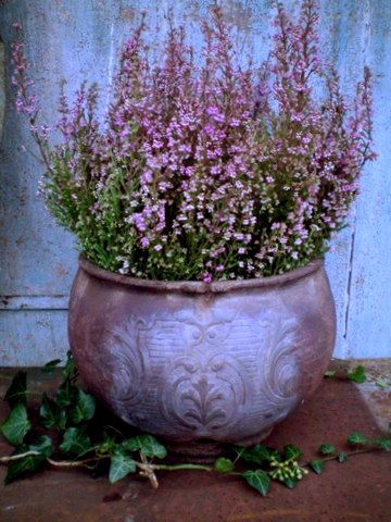I was going to plant these in my front yard, but they look better in this pot!