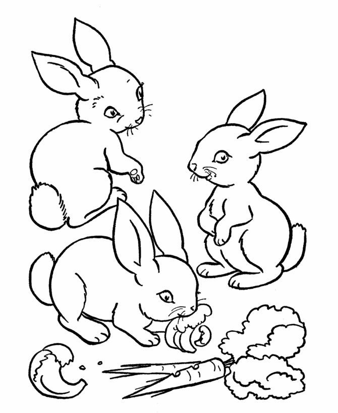 animal rabbit coloring pages rabbit is include a cute animal which ussually can kept by humans are you likes with rabbit this rabbit co