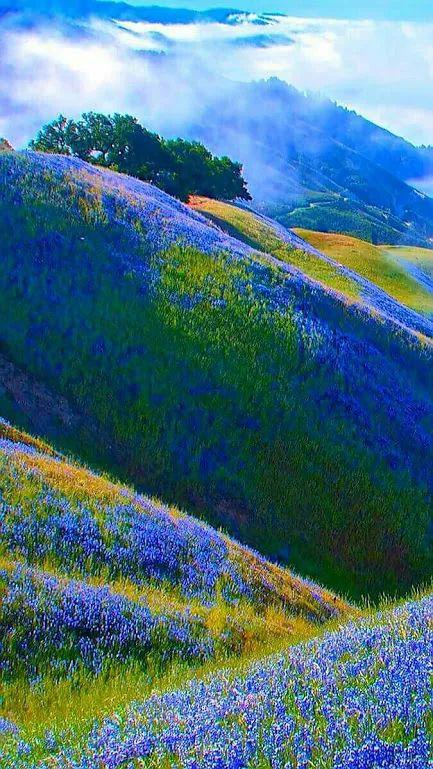 My blue world