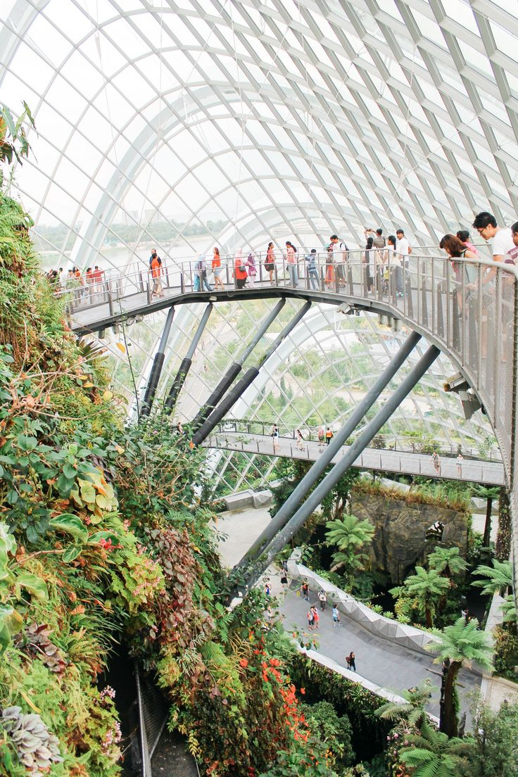 Under The Dome And Into The Forest... In Singapore, Flower Dome and Cloud Forest, Gardens By The Bay (11)