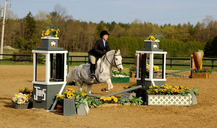 2014 SHOW LEASE AVAILABLE on MED. PONY  Contact Belinda@bellewodequestrian.com