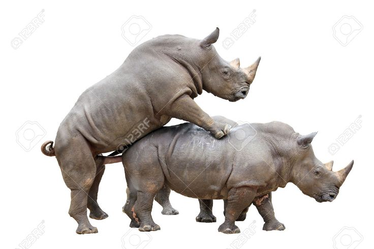 17 Best images about RHINO on Pinterest   Models, Muscle ...