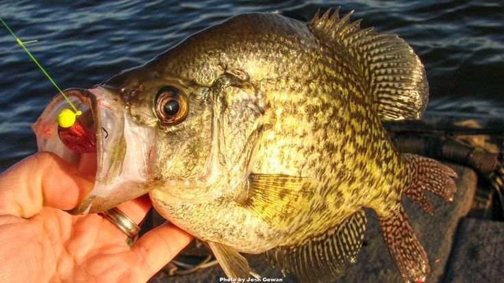 Wired2fish river2sea whopper plopper silent review for Wired 2 fish
