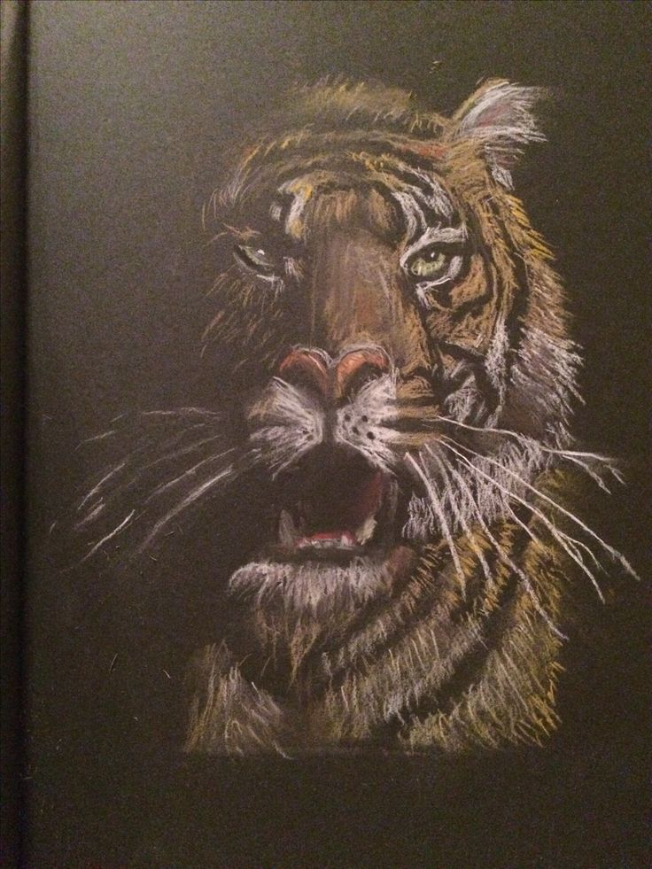 Tiger drawing - pastel pencils