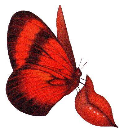 four butterfly images   Siento labios de mariposa