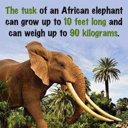It's Elephant Appreciation Day!