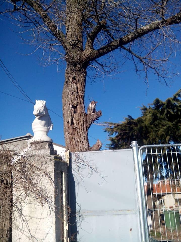 gatito subido en rama de arbol