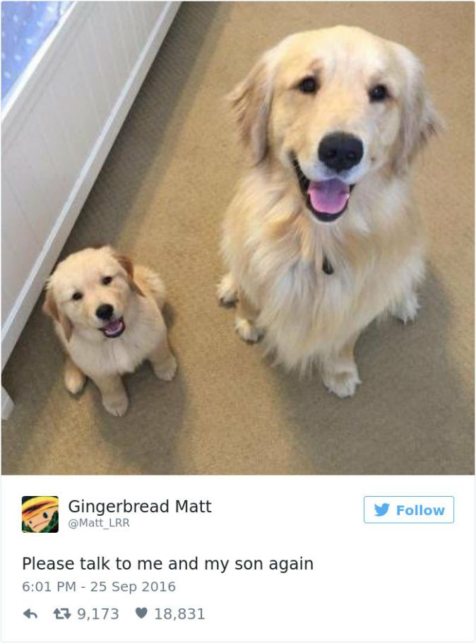 The 28 Best Tweets About Dogs In 2016 Cute Dogs Golden Dog Dogs