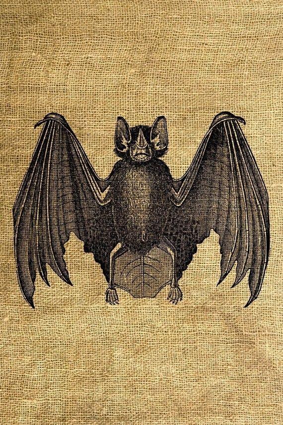 Instant Download Bat Vintage Illustration  Download and by room29