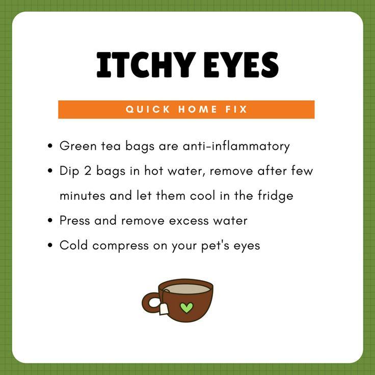 Treating A Dog Eye With A Tea Bags
