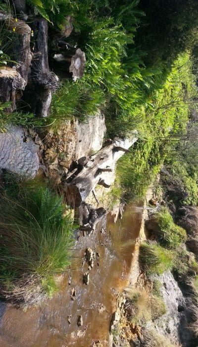 Rediscovering the Charles Darwin Hike -