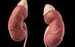 Doença de Addison – O que é, Sintomas e Tratamentos