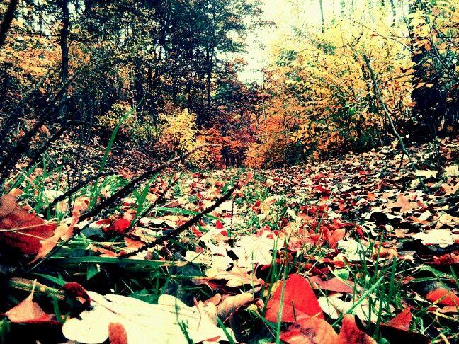 Jesień - autumn Las - forest Piękno - Beauty Natura