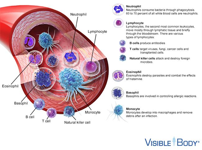 Adaptive Immunity  Now let's have a look at the other arm of the immune system: adaptive immunity.  Adaptive immunity is the body's way of mounting an immune response that is specific for each pathogen. B- and T-lymphocytes, or B- and T-cells are central to adaptive immunity. They are able to recognize each kind of invading pathogen and respond with a large, focused response tailored to that specific invader. What's more, each time a new pathogen is…