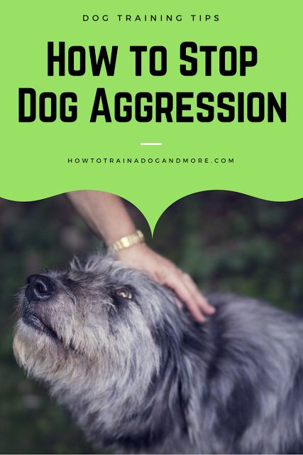 how to stop a dog from being aggressive...visit this blog for lots of dog training tips, including barking, biting, aggression, toilet training, jumping, pulling, separation anxiety and more!
