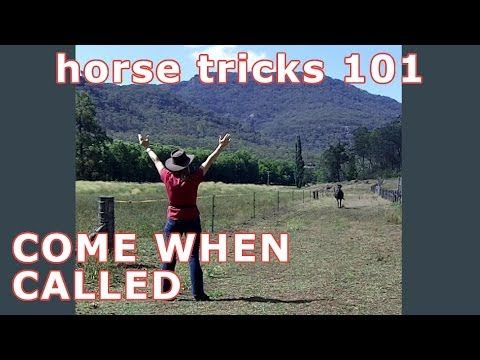 Teach Your Horse a Useful Trick | Horse Tricks 101