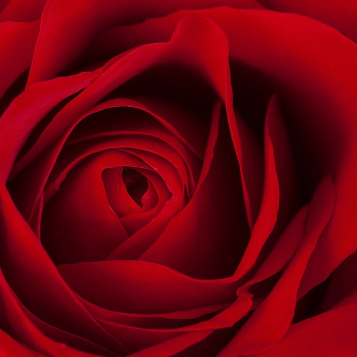 I love shooting flowers! This shot of a gorgeous red rose was taken as part of ongoing collection called Inner Floral. To celebrate Canada Day, we are offering a discount of 25% off all floral images. Use the coupon code CANADADAY17.