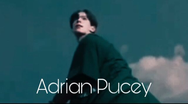 Adrian Pucey Harry Potter Pictures Harry Potter Obsession Harry Potter Characters