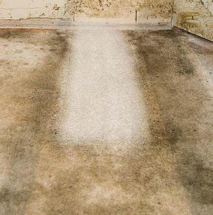Mohawk Garden Row Carpet Garden Ftempo