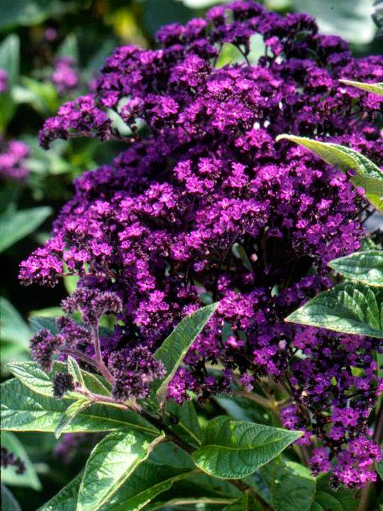 Common Purple Garden Flowers best 25+ purple flowers ideas on pinterest | purple lilac, purple