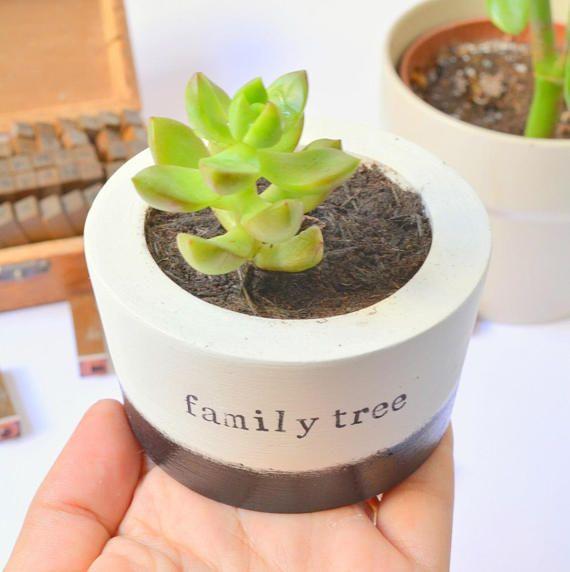 Succulent Cactus Planter Pot Vase family tree