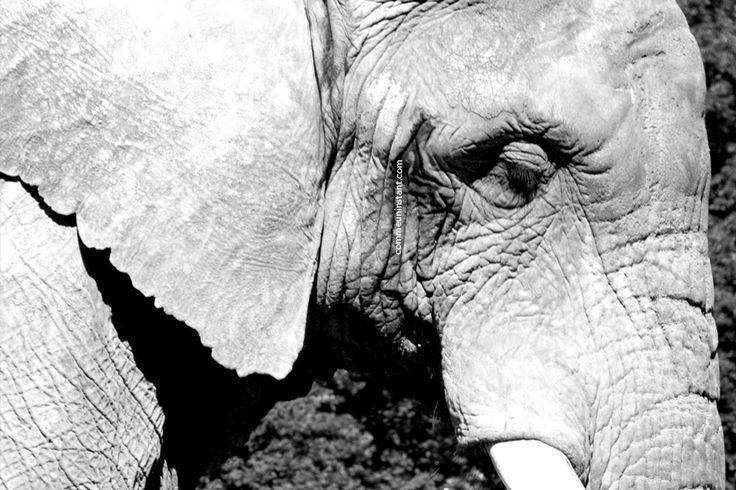 Animaux  * Eléphant http://www.commeuninstant.com/galerie/faune-et-flore/animaux/jardin-animalier